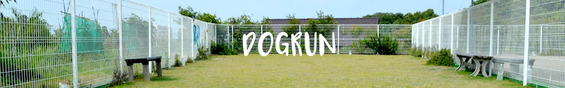 DOGRUN